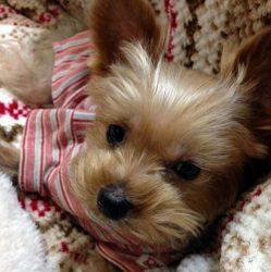 Mikan's Blog